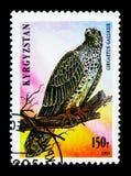 Kurz-ausgewichene Schlange Eagle (circaetus gallicus), Greifvögel serie Lizenzfreies Stockbild