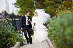 Kus van bruid en bruidegom Stock Afbeeldingen