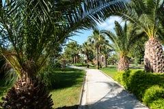美丽的棕榈树从事园艺, Kusadasi,土耳其 免版税图库摄影
