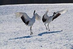 Kushiro japanese crane center Stock Images