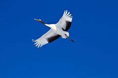 Kushiro japanese crane center Royalty Free Stock Images