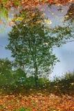 Kuskovo公园在莫斯科 树反射在水中 免版税库存照片