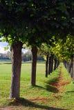 Kuskovo公园在莫斯科 树胡同 库存照片