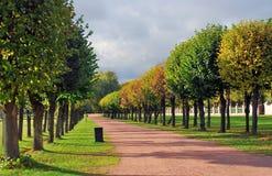 Kuskovo公园在莫斯科 秋天桦树叶子草甸橙树 没有人民 库存图片