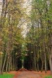 Kuskovo公园在莫斯科 库存图片