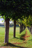 Kuskovo park w Moskwa Drzewo aleja Zdjęcia Stock