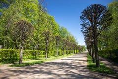 Kuskovo park Stock Image