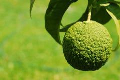 kuslig frukt arkivbild