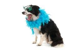 kuslig hund Royaltyfria Foton
