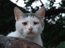 Kuslig katt Royaltyfria Bilder