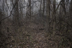 kuslig mörk läskig skognighttime för bakgrund Arkivfoton