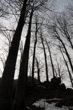 kuslig skog arkivfoto