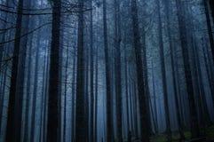 kuslig skog Royaltyfria Bilder