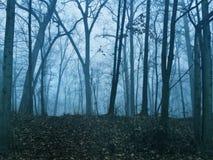 kuslig skog Royaltyfria Foton