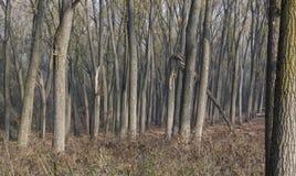 Kuslig skog i dagsljus arkivbild