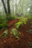 Kuslig sten på slutet av slingan in i den dimmiga skogen Royaltyfri Fotografi
