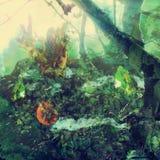 Kuslig trädgård i färg Royaltyfria Foton