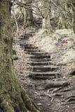 kuslig trappa arkivfoton
