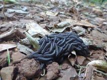 Kusliga Crawlies, säkerhet i nummer Royaltyfri Fotografi
