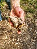 Kusliga crawlsimmare på vandringar arkivfoton