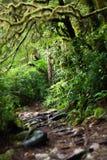 Kusliga crawly trän i Jedidiah Smith Redwood Park Arkivfoto