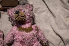 Kusliga rosa färger och gammal björn Royaltyfri Bild