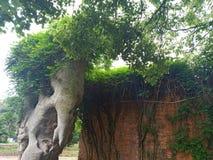 Kusliga skulpturer och vinrankor arkivfoton