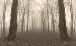 Kusliga spegelförsedda träd i dimmig skog Royaltyfria Foton