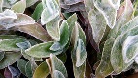 Kusliga växter Arkivfoton