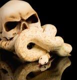 Kusligt haloween ormen Royaltyfri Fotografi