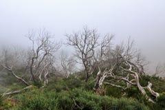 Kusligt landskap som visar en dimmig mörk skog med död vit tre royaltyfri foto
