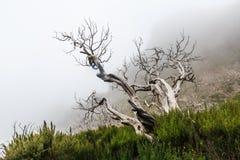 Kusligt landskap som visar en dimmig mörk skog med död vit tre arkivbild