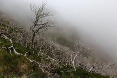 Kusligt landskap som visar en dimmig mörk skog med död vit tre royaltyfri bild