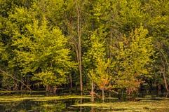 Kusligt tillbaka vatten av Mississippi, nära svarta Hawk Park Arkivbild