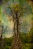 Kusligt träd fotografering för bildbyråer