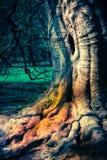 Kusligt träd arkivbilder