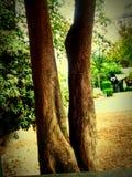 Kusligt träd Royaltyfri Foto