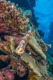 Kusligt undervattens- djur Royaltyfri Bild