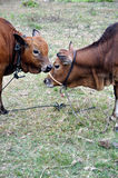 Kuss der Mama Lizenzfreies Stockfoto
