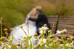 Kuss des Bräutigams und der Braut Stockfotos