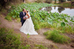 Kussende bruid en bruidegom dichtbij lotosvijver Stock Fotografie