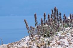 Kust av havet Fotografering för Bildbyråer