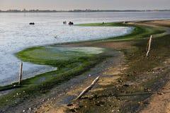 Kust av sjön med blått-gräsplan alger Fotografering för Bildbyråer