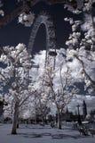 Kust av Thames med stora Ben Arkivfoton