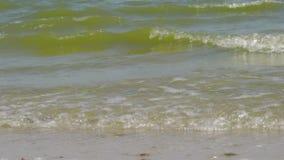 Kust- Azov havsvågor arkivfilmer