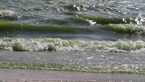Kust- Azov havsvågor stock video