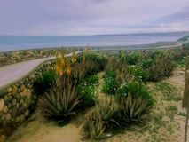 Kust- bana i La Jolla Kalifornien royaltyfria bilder