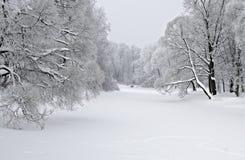 Kust bomen in de winter Stock Fotografie