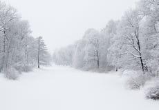 Kust bomen in de winter Stock Afbeelding