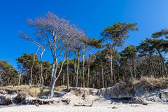 Kust Bos op de Oostzee Stock Afbeeldingen